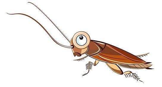 bebe cucaracha