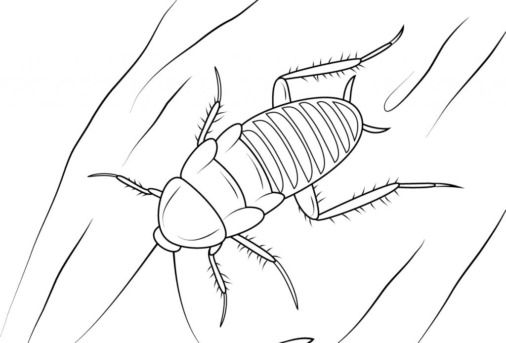 cucaracha albina como es