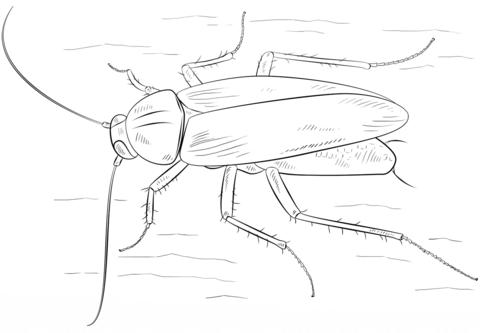 soñar con matar cucarachas